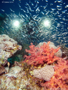 Colourful Red Sea. by St&#233;phane Primatesta 